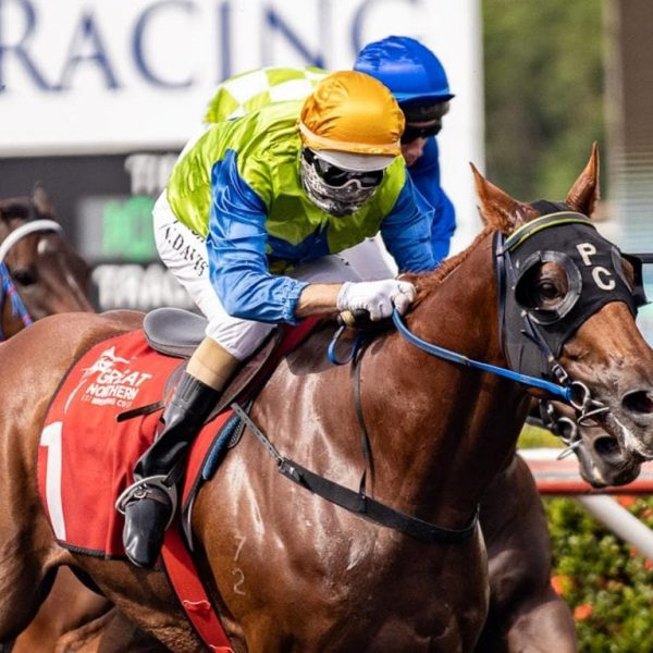 Phil Cole's Smuggling going for a hat-trick of wins at Fannie Bay