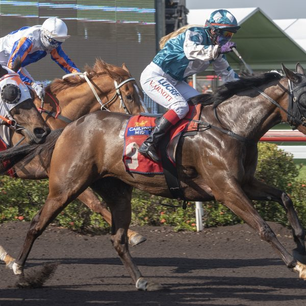 SA trainer Nicole Bruggemann not regretting move to Darwin after overseeing hat-trick of winners at Fannie Bay