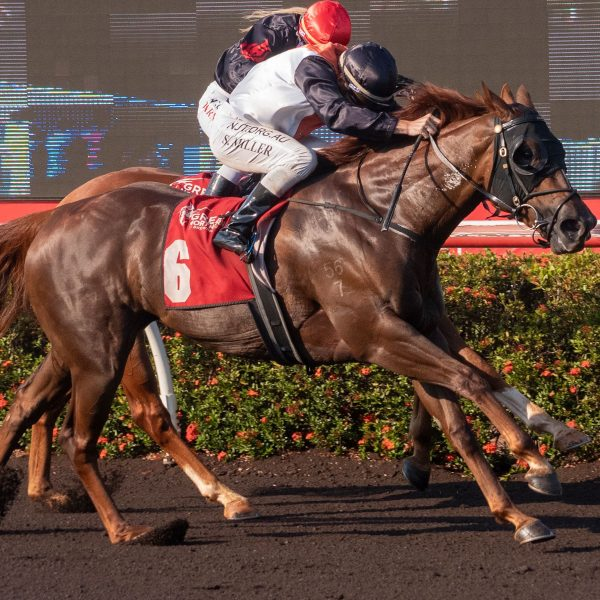 Mayameen wins 2021 Horse of the Year